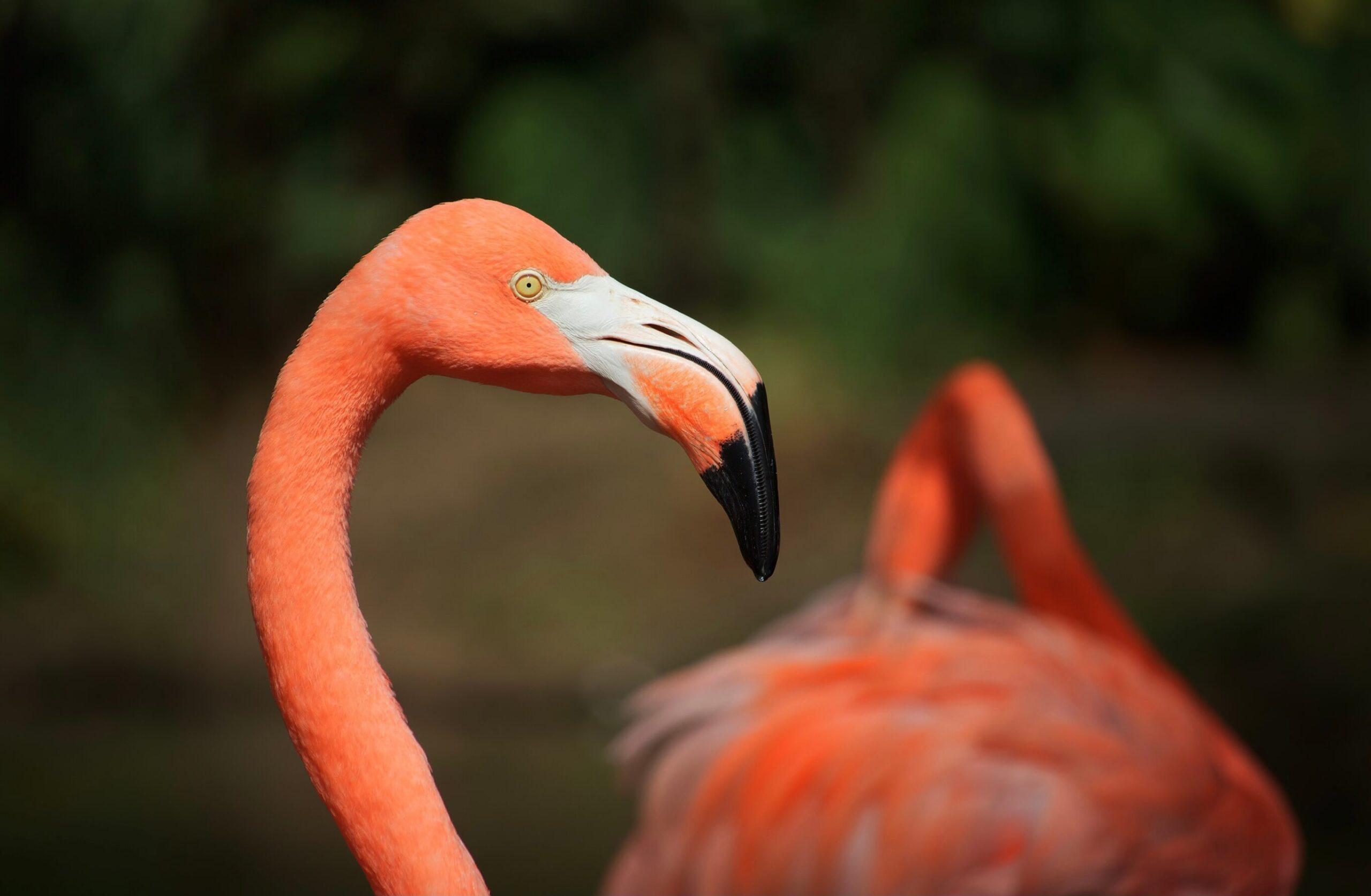 Amazon Com Flamingo Bird Bisexual Pride Flag 5